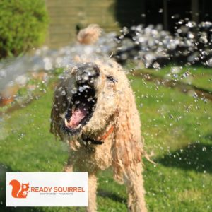 Dog being sprayed by a hose