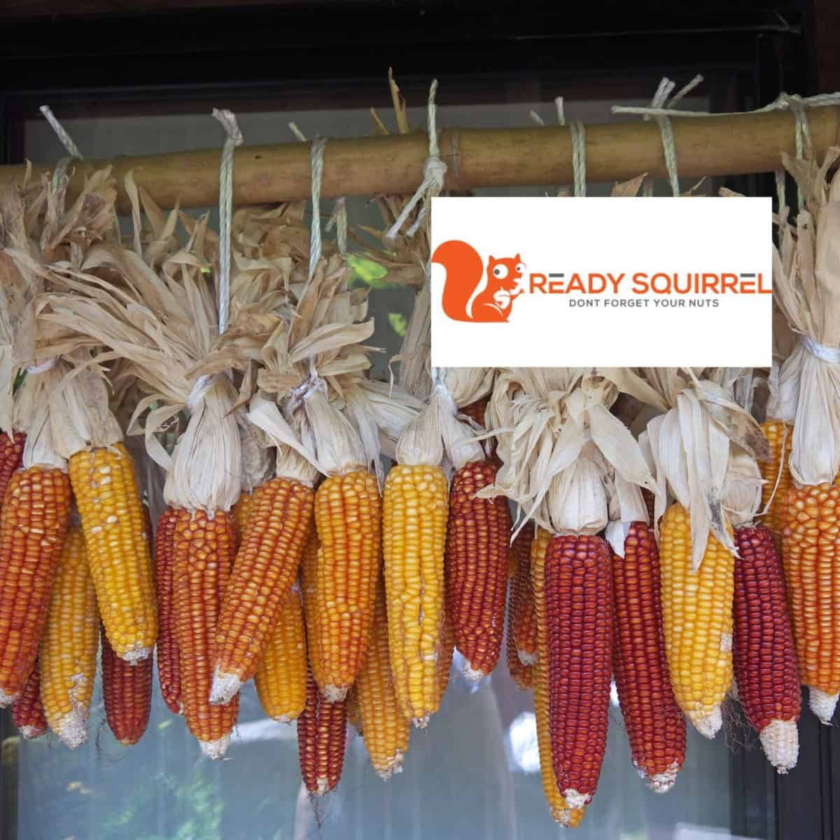 How Long Can You Store Dried Field Corn (O2-free storage)
