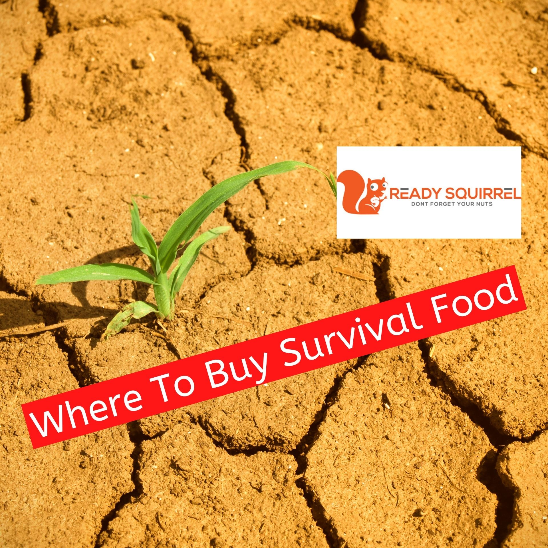 Where To Buy Survival Food