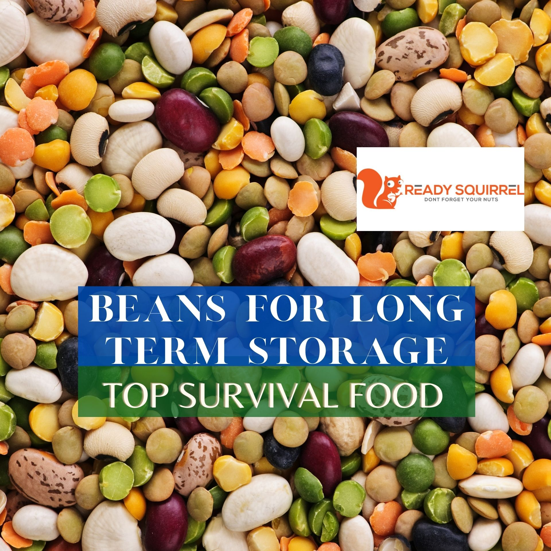 Beans For Long Term Storage: Top Survival Food